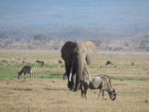 Ein paar Tiere die wir auf unserer Safari im Nationalparkhellip